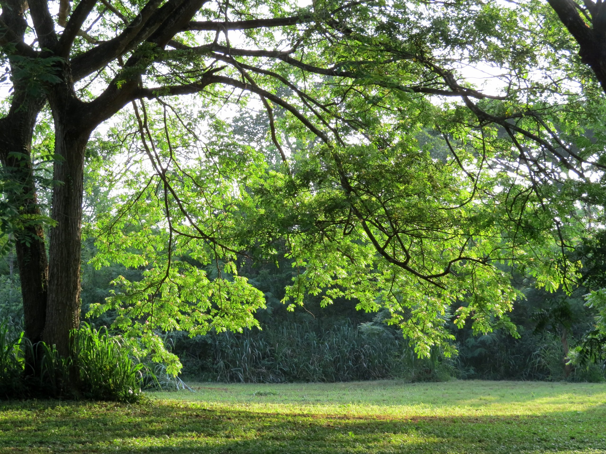 4 Methods to Boost Your Lawn's Appearance